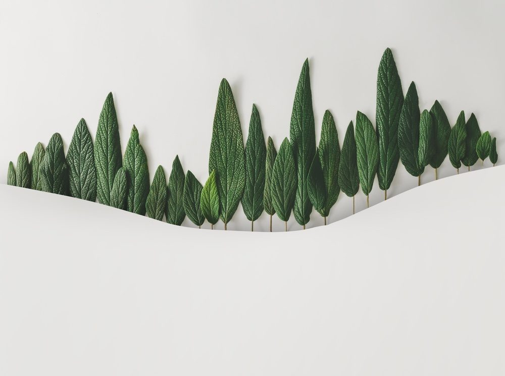 Green Leaves on Rolling White HIlls