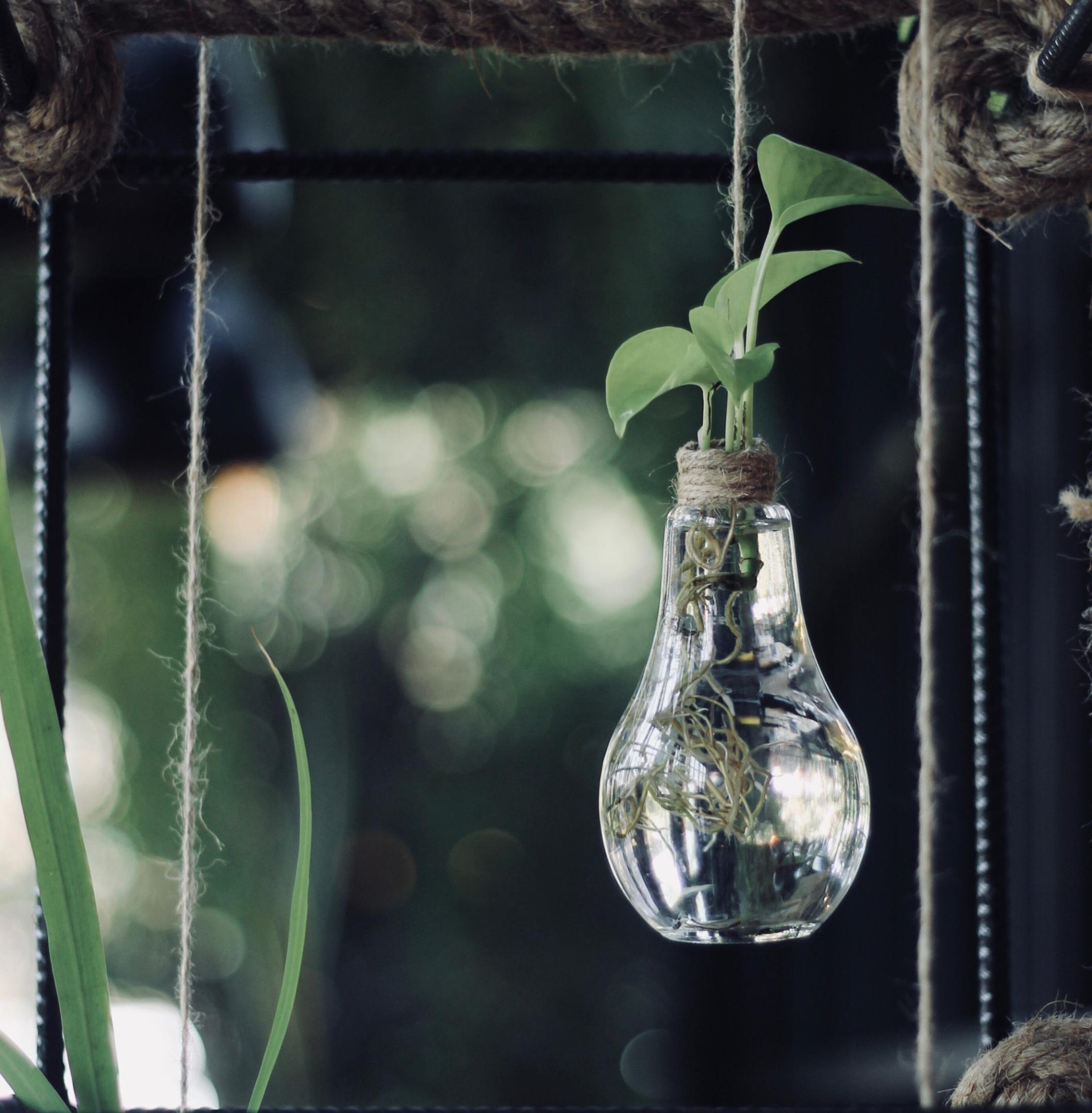 Sustainable, Impact Ideas. Green growing out of a light bulb vase.